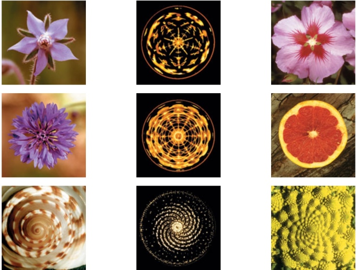 Flower forms and cymatics